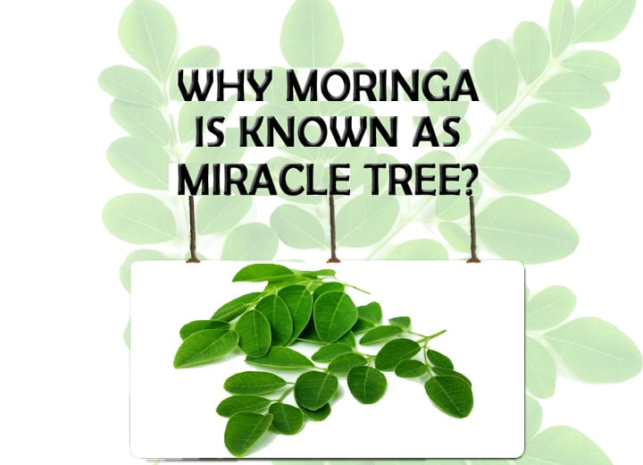 MORINGA MIRACLE TREE : WHY MORINGA IS KNOWN AS MIRACLE TREE?